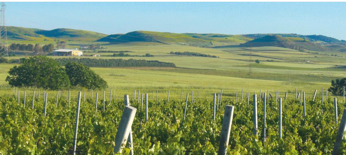 sa muxurida azienda vitivinicola sarda